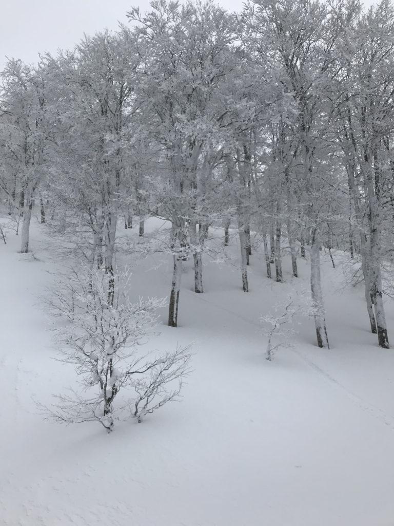 阿仁スキー場 ゲンテンスティック ブライン スノーサーフ