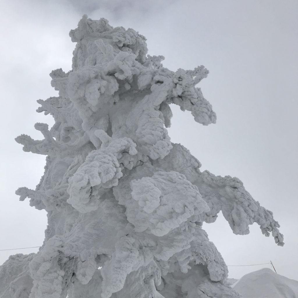 樹氷 ブライン BRINE